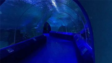 Aquarium Tunnel को लागि 180 या 90 डिग्री एक्रिलिक पैनल