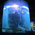 एक्वैरियम सिलिन्डर ठूलो मछली टैंक सफा वा समुद्री पार्कको लागि खाली गर्नुहोस्