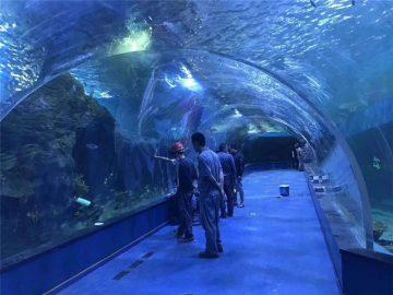कस्टम plexiglass एक्रिलिक सुरंग मछलीघर